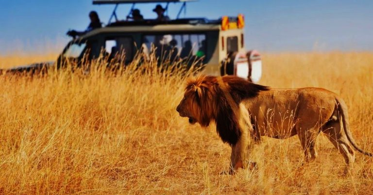 African Safari – Various Myths and Misconceptions – Travel and Leisure