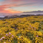 The Best Places to See California's Wildflowers & Superblooms